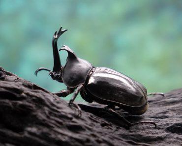 O que aconteceria se todos os insetos desaparecessem do planeta?