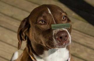 10 Melhores Dicas para Adestramento de cães - Passo a Passo