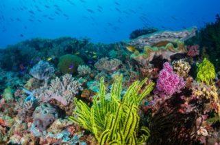 Como os recifes de coral se formam?