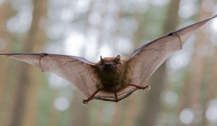 Onde Morcegos Vivem?
