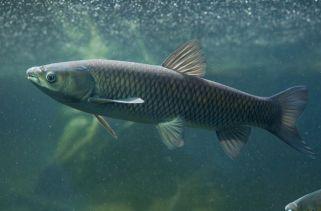 Os Tipos Mais Comuns De Peixe Do Mundo