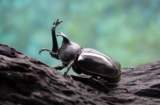 Como os insetos se esquentam?