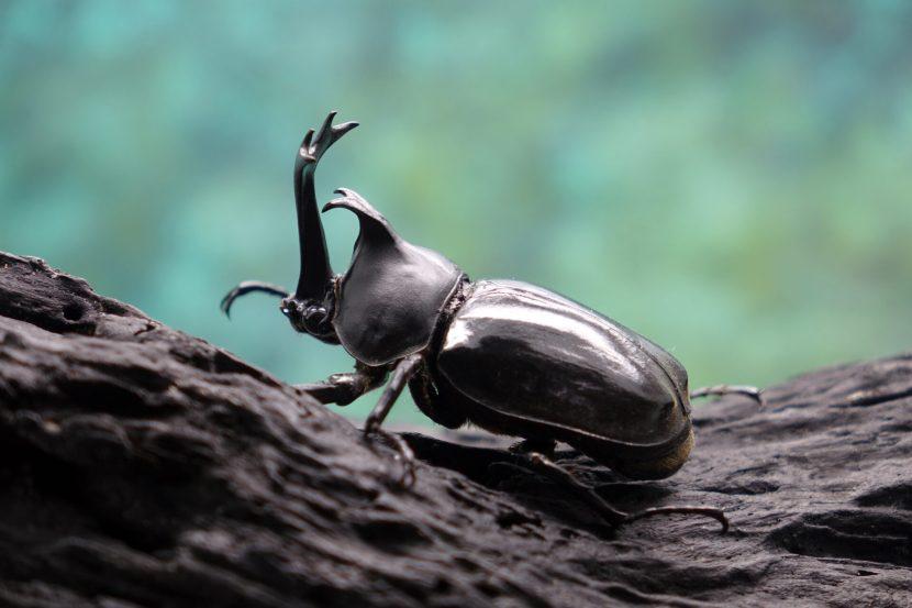 Como os insetos ficam quentes?