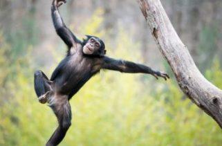 Por que os seres humanos são calvos em comparação com outros mamíferos?