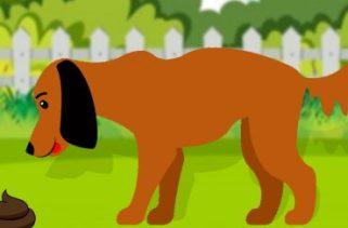 Por que os cães comem cocô?