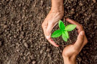 As plantas retêm o solo ou é o contrário?