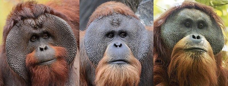 Quais espécies foram descobertas na última década (2010-2020)?