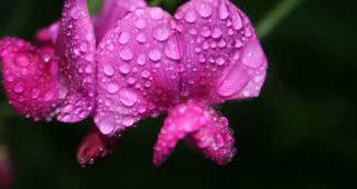 Top 10 flores com cheiro mais agradáveis