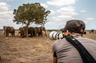 Como os cineastas permanecem seguros enquanto filma vídeos sobre animais selvagens?