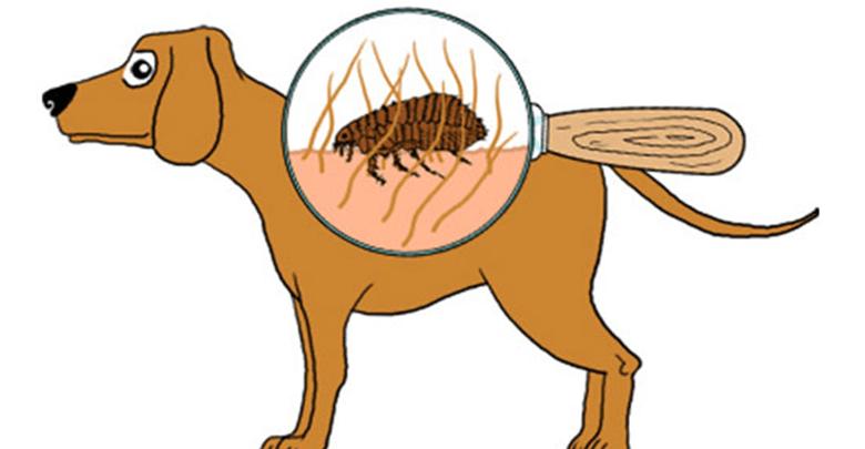 remédio caseiro para pulgas