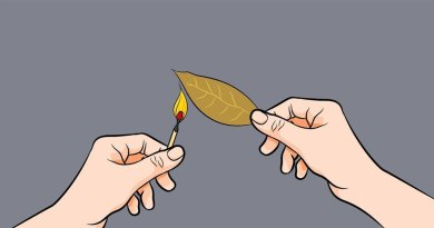 Queimar folhas de louro
