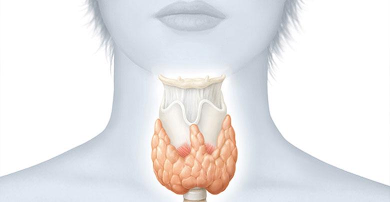 Tireoide - 6 sinais que seu corpo dá quando ela não está bem - Dicas e  Receitas Aqui