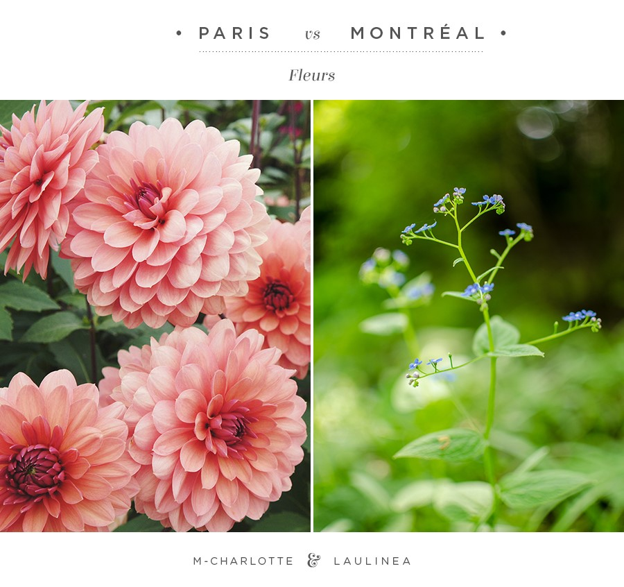 fleurs_parisvsmontreal