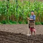 Corn Farmer, Solola