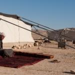 Bedouin, Palmyra, Syria
