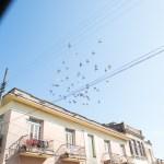 Flock of Pidgeons, Camaguey