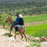Going Home from School, Duma, Palestine