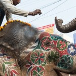 Painted elephants receive food and donations, delivering the money to the mahout (elephant trainer)