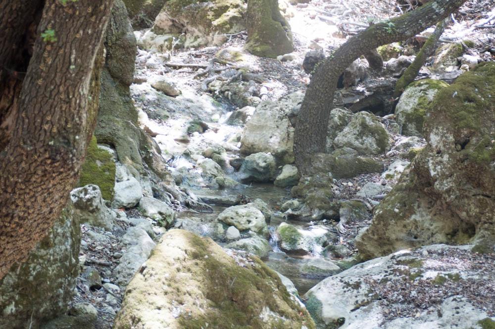 Dolina leptira Rodos