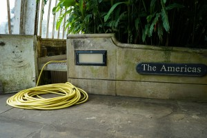 Tuyau jaune, Kew Garden #3