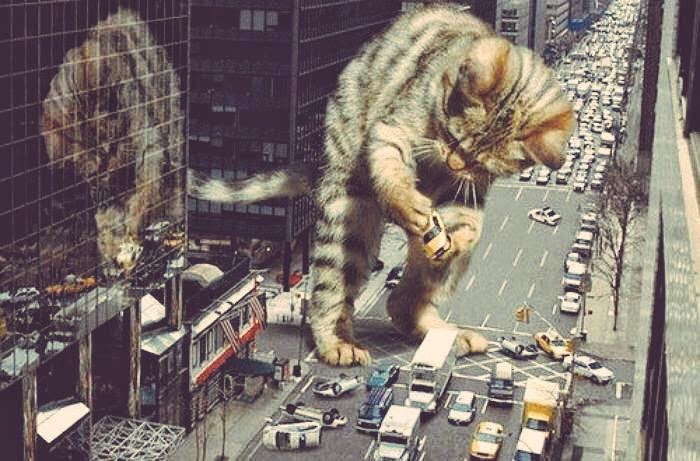 This was not on the news this  #caturday   ...