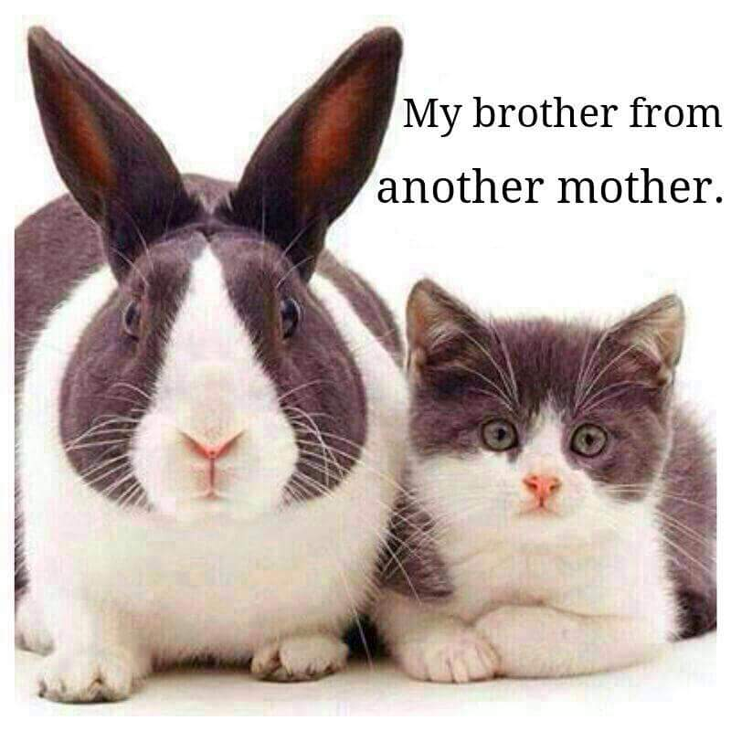 Brother from another mother...