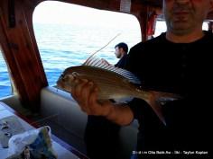 Didim balık avı