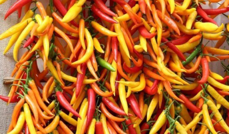 Chilis wirken schmerzlindernd und helfen bei Diabetes