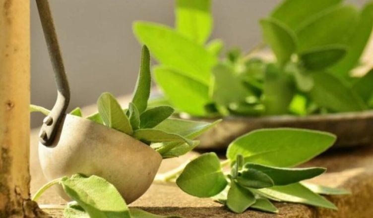 Salbei reduziert die Schweißbildung und wirkt stresslindernd