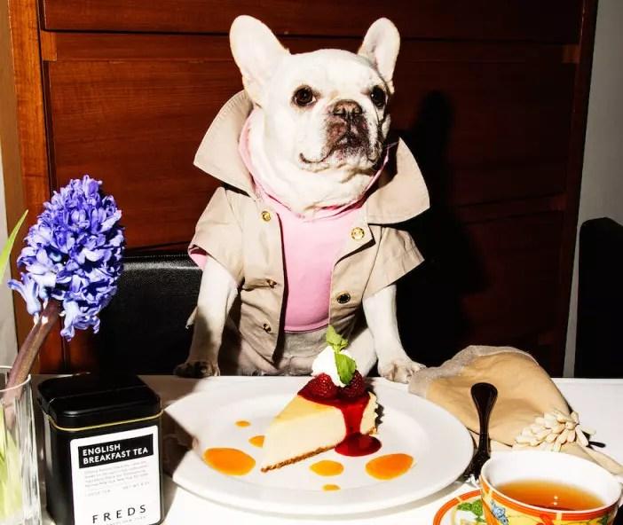 Dog canine tasting menu at the restaurant Barneys New York