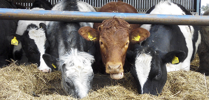 Concern over the use of hormones in animals.