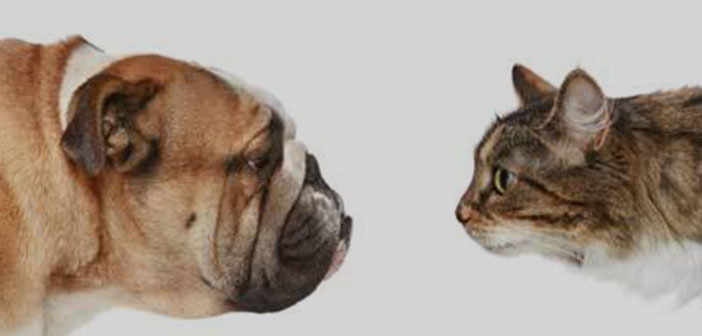 chiens Vs. Gatos