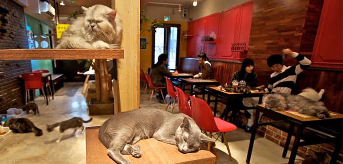 "boutique KitTea es el primer & quot; Cat Coffe"" aux Etats-Unis."
