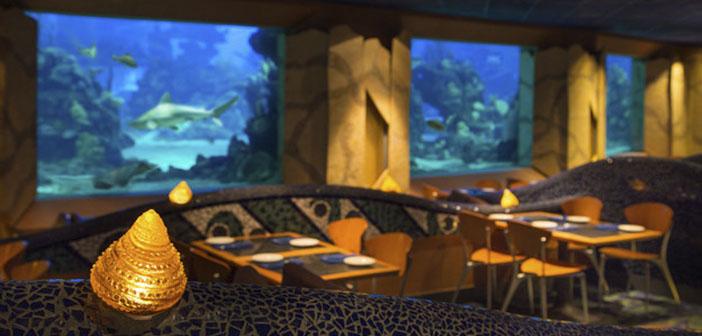 El comedor está presidido por un gran arrecife de coral repleto de criaturas marinas que hipnotizan hasta al más avispado de los clientes, además el menú gira entorno a los sabores del mar.