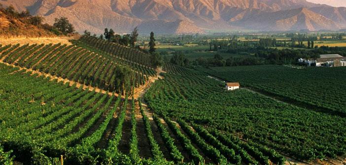 Mendoza es la región más productiva de vinos en Argentina con el 70% de los vinos del país. En las últimas décadas, han alcanzado un alto nivel internacional y cuentan con el reconocimiento de expertos como Parker o Suckling y una amplia aceptación de los mercados más exigentes.