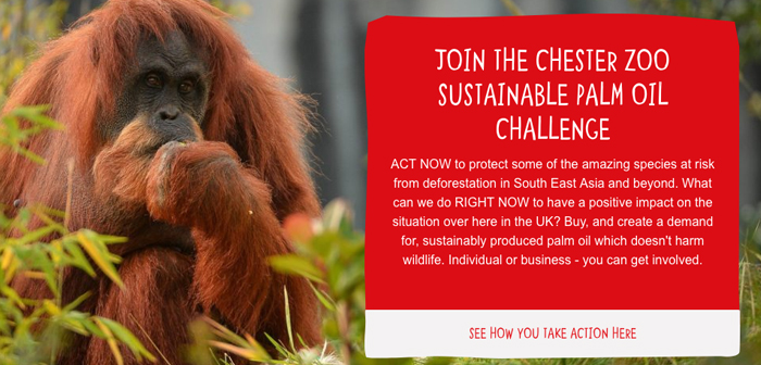 Restaurants who want to exercise their social responsibility and the environment can turn to the toolkit of sustainable palm oil for Wildlife Act, Available for free in English.