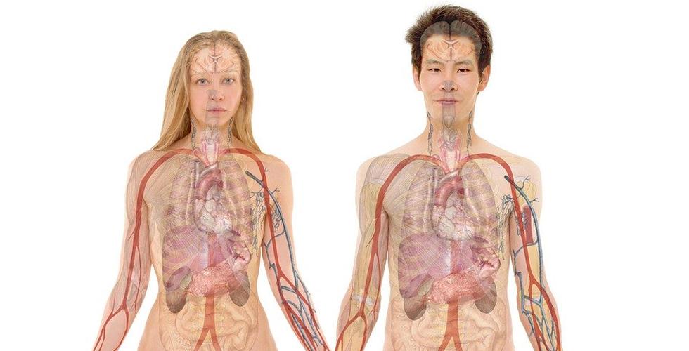 Karaciğerin Sessiz Çığlığı
