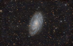 M33_ifn_50