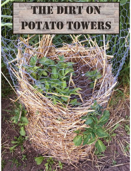 Potato Tower.jpeg