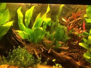 Terugblik Aquarium tentoonstelling Terneuzen