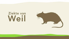 Ziekte van Weill