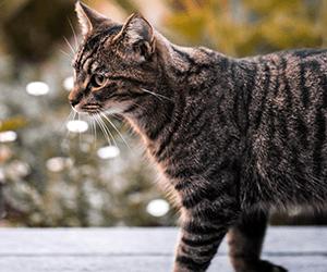 Elektronische Kattenverjager