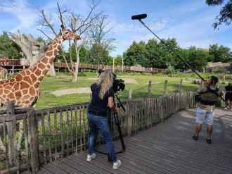 filmploeg bij de giraffen