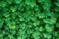 groen positief denken