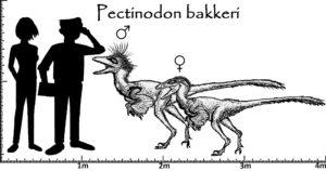 Größenvergleich Pectinodon