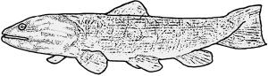 Melvius unisex