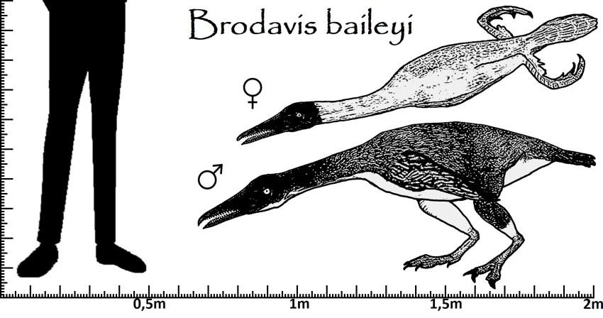 Größenvergleich Brodavis