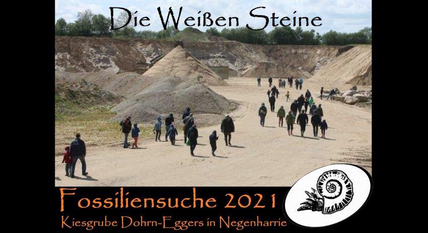 Veranstaltung Fossiliensuche Kiesgrube Negenharrie