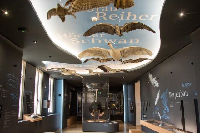 Braunschweig Vogelsaal