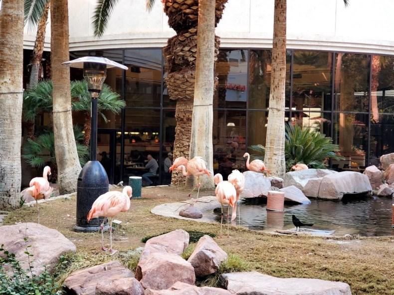Flamingo Habitat, Las Vegas